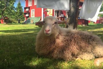 Lilla Sverigebyn. Vegansk semesterby i Småland.